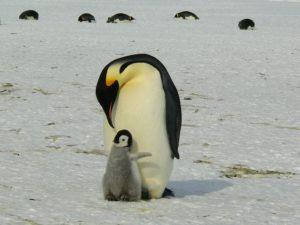 Auf Antarktis Reisen Pinguine beobachten