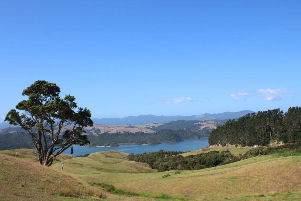 Coromandel ist einfach nur schön und sollte auf keiner NZ Rundreise fehlen
